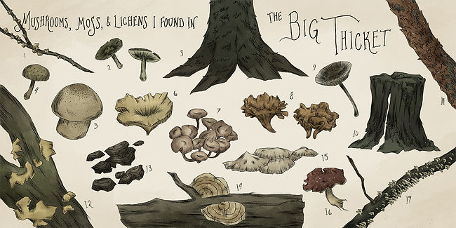 The Big Thicket_Color (web).jpg