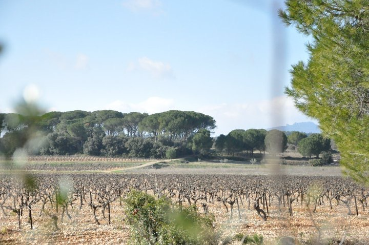 Dans les vignes autour de Gignac