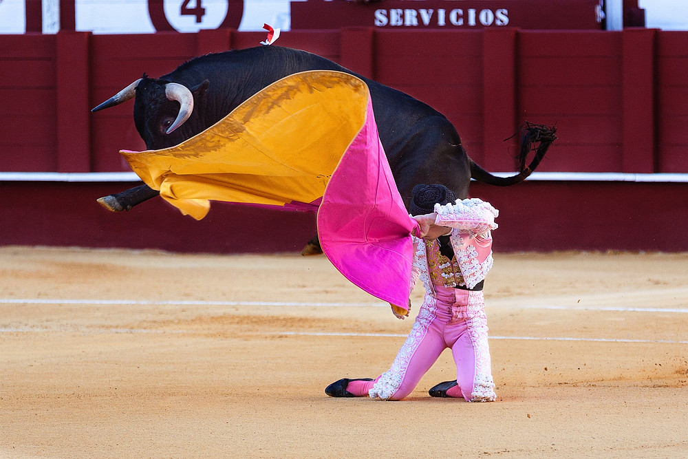 bull fight, bull market