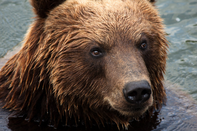 Is the Bear Market here and how long will he stay?