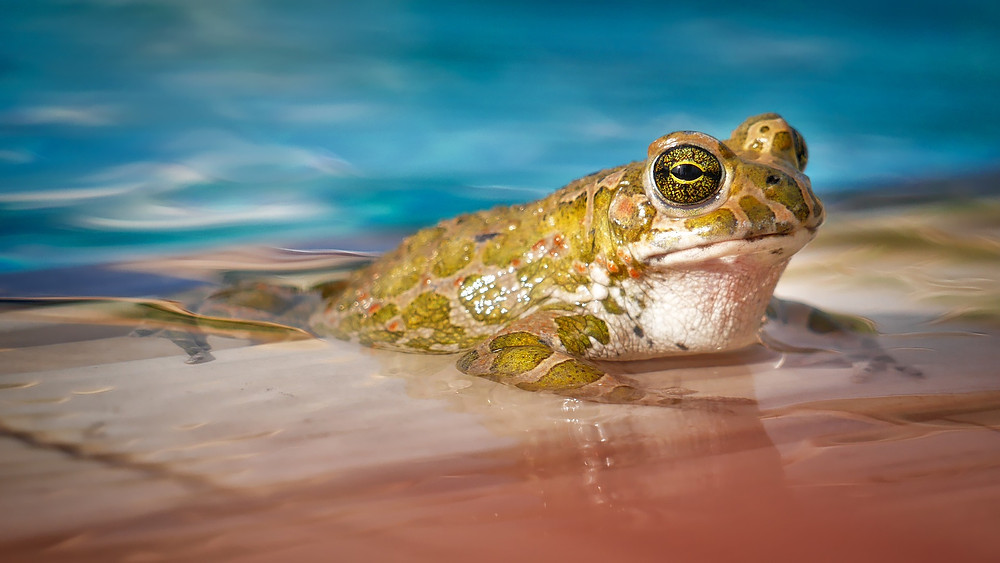 frog, water, hot, soup