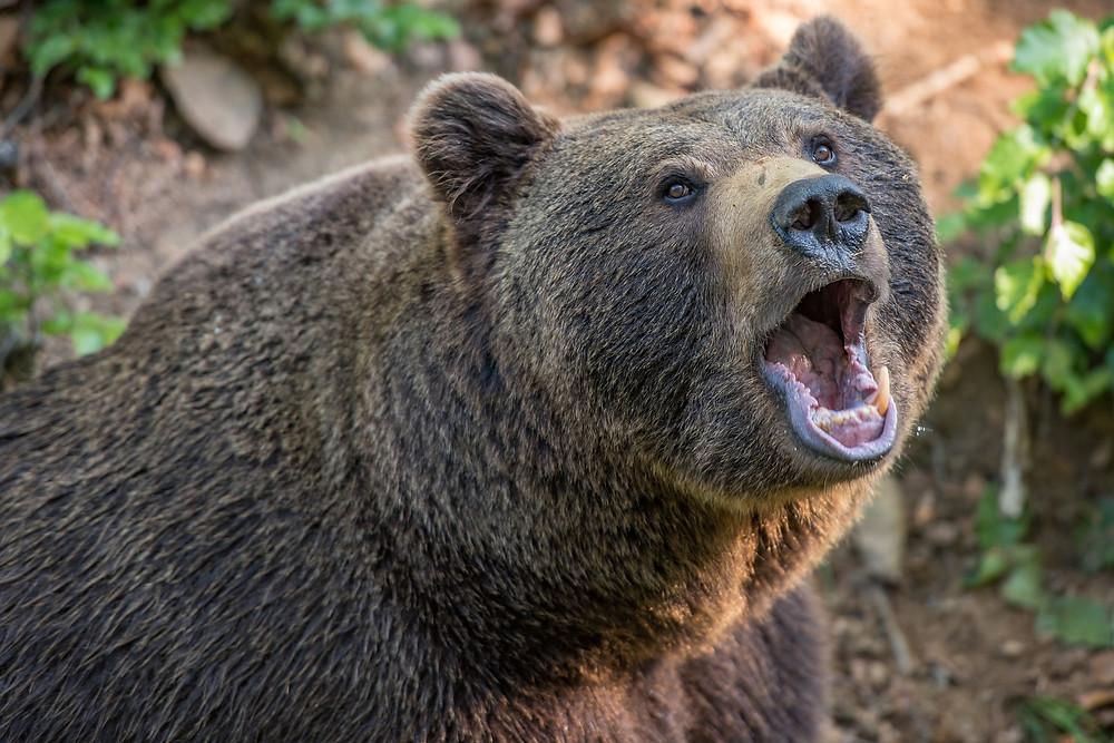 Bear Market, bear roars, danger