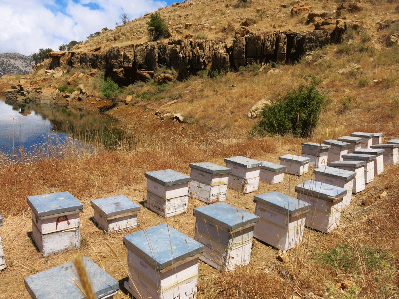 Miel du Levant Bee Hives