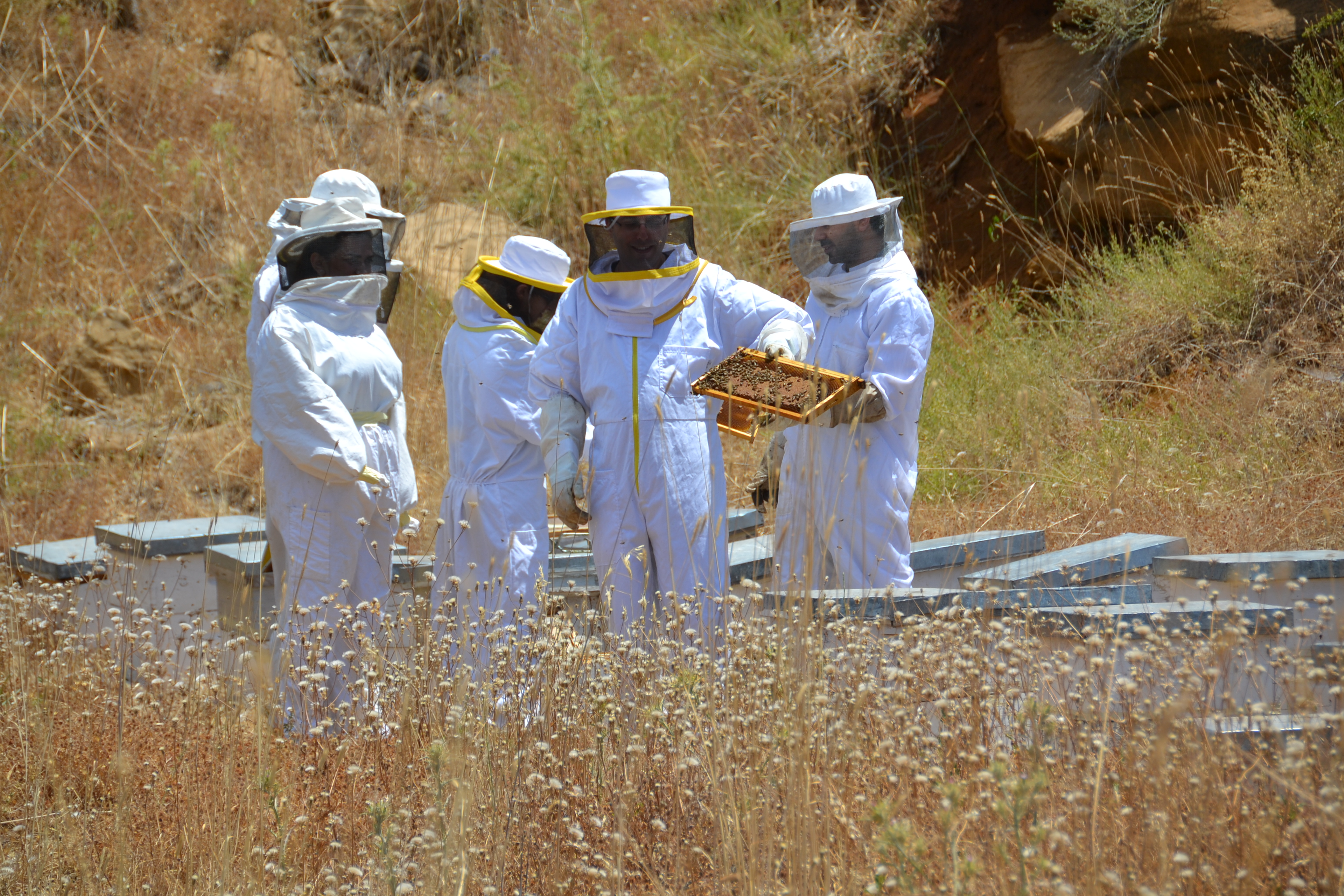 Miel du Levant Harvesting