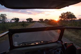 Stunning Sunrise Safari