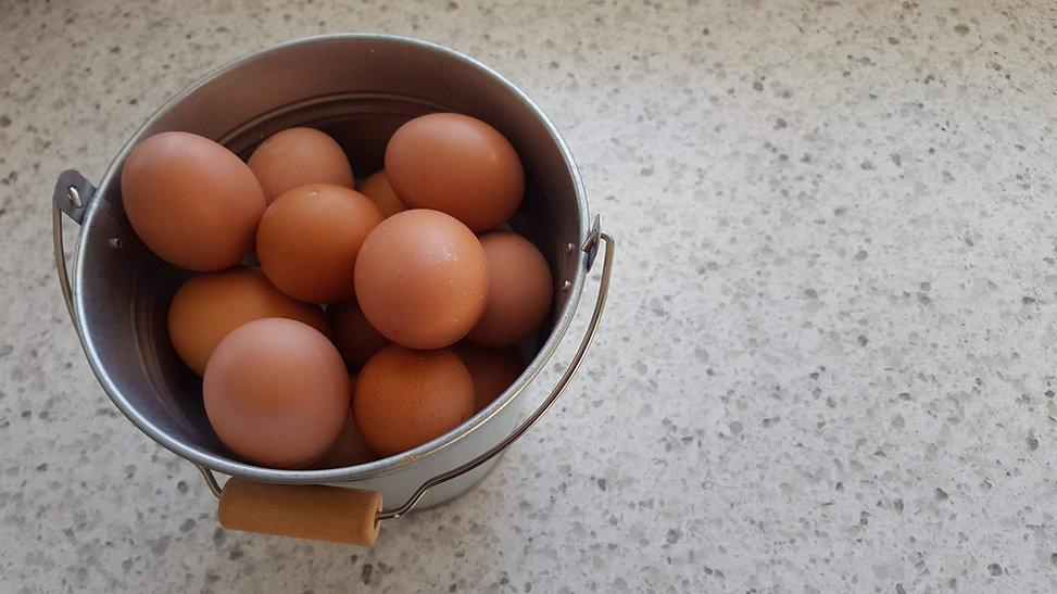 eggs in bucket_edited.jpg