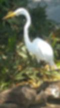a visitor.jpg