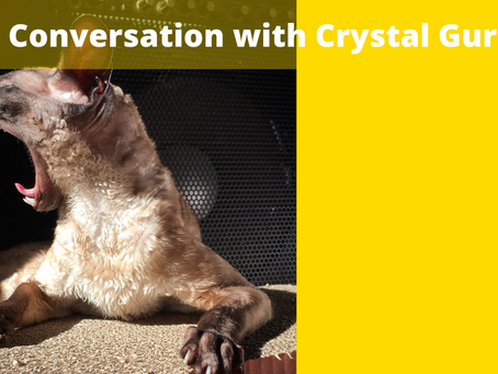 A Conversation with Crystal Gurr
