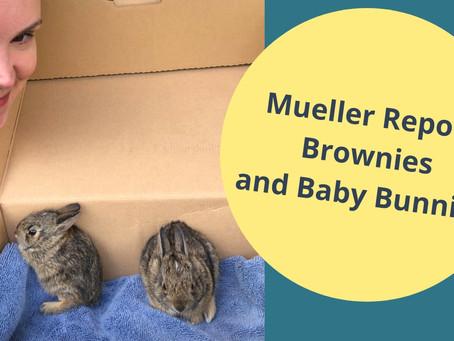 Mueller Report Brownies and Baby Bunnies
