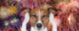 Собака боится салюта, что делать?