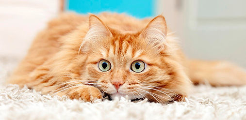 Как избавить кошку от стресса?