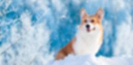 Как защитить здоровье питомца зимой?