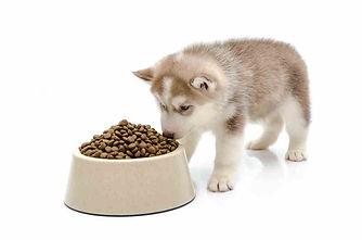 Как выбрать корм для щенка?