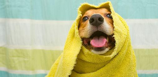 Как правильно мыть питомцев?