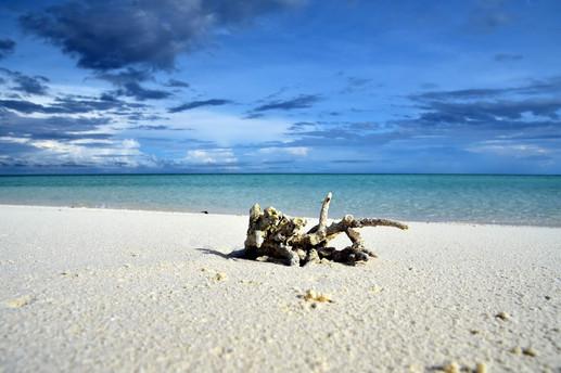 Dream Island: Coral