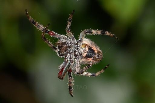 Tamarino, Guanacaste: Spider