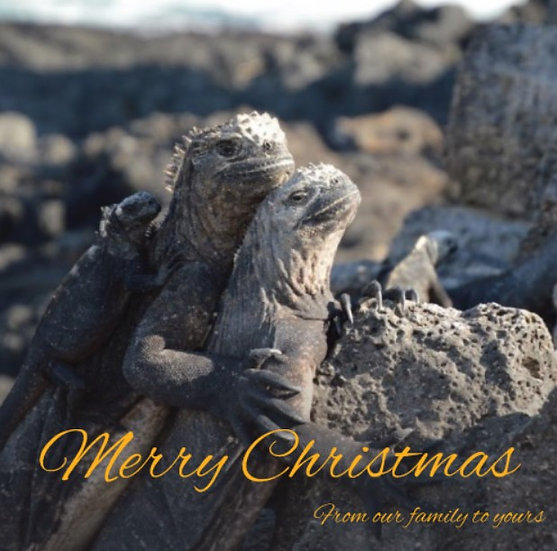 Marine Iguana Family Christmas Cards