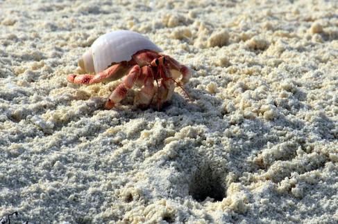 Dream Island: Hermit Crab