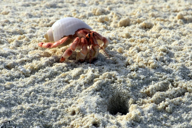 Dream Island: Hermit Crab