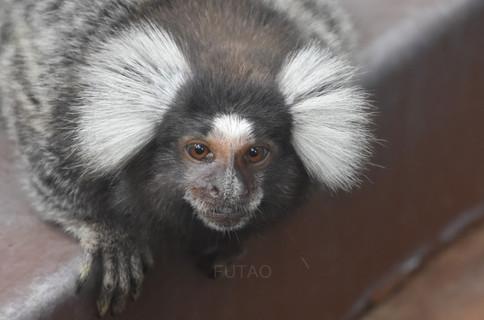 Diamante Eco Park: Monkey