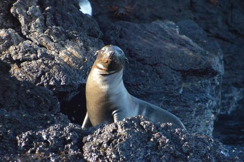 Elizabeth Bay, Isabela Island, Galapagos