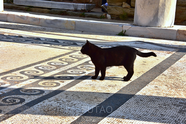 Kitty on mosaic floor, Delos, Greece