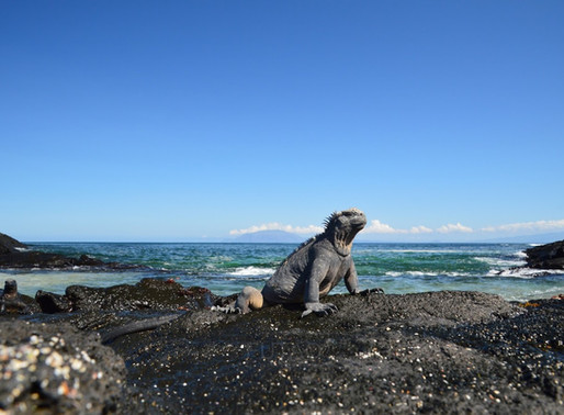 Walking in the Footsteps of Darwin: The Galapagos Islands
