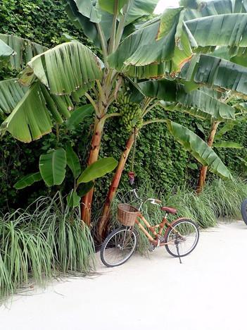 Around Hurawahli Resort