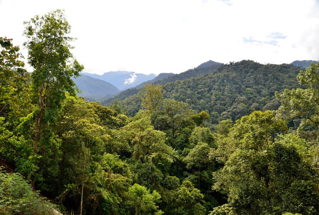 Mindo Cloud Forest, Quito, Ecuador