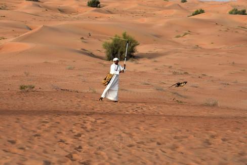 Falconry in the Dubai Desert