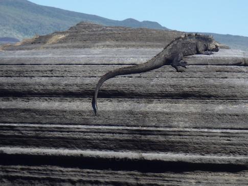 Espumilla Beach, Santiago Island, Galapagos