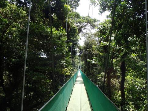 Hanging Bridges, Monteverde, Guanacaste