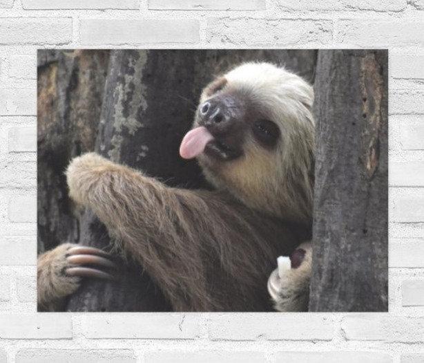 Cheeky Sloth