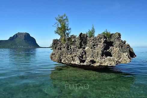Coral, Mauritius