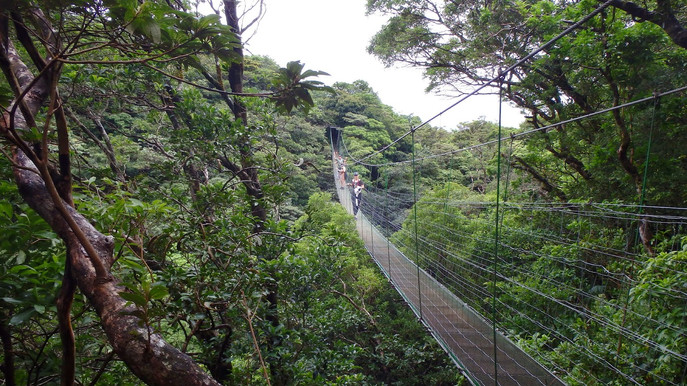 Hanging Bridge, Guanacaste