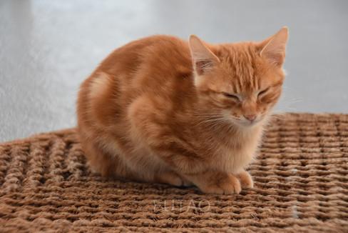 Kitten on our doormat, Helianthus Suites, Santorini, Greece