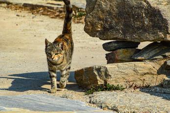 Kitty walking along the ruins, Delos, Greece