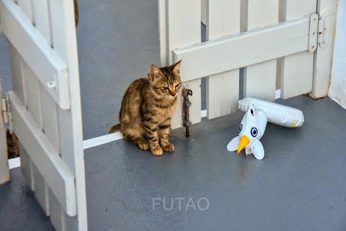 Kitten on our terrace, Helianthus Suites, Santorini, Greece