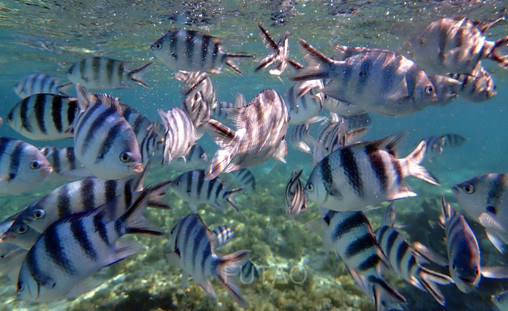 Snorkelling in Mauritius
