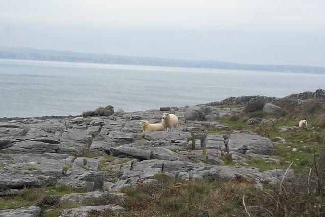Rocky Edge, County Clare, Ireland