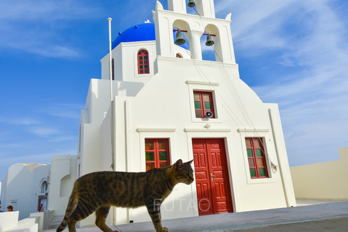 Cat in front of the blue dome church, Santorini, Greece