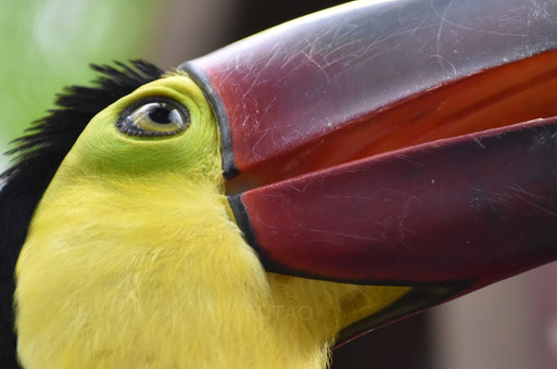 Diamante Eco Park: Bird Sanctuary