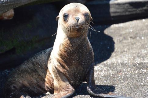 Punta Espinoza, Fernandina Island, Galapagos