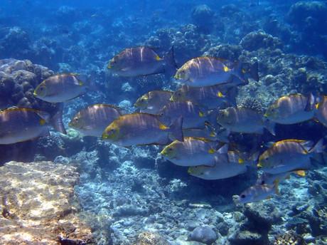 Snorkelling in the Maldives: Fish