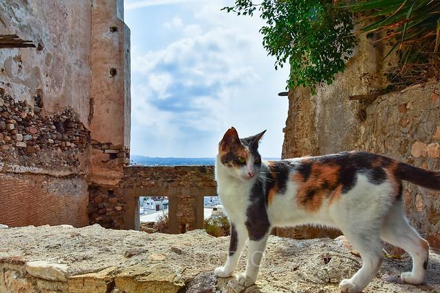 Cat in the Kastro, Naxos, Greece