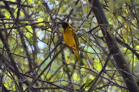 Casela Wildlife park, Mauritius
