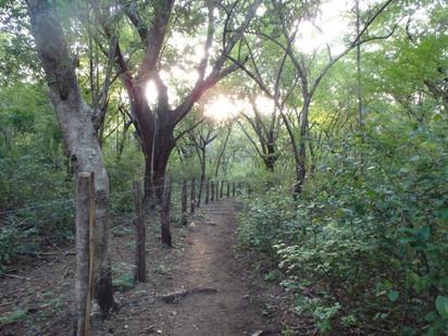 Monkey Trail, Matapalo Beach, Guanacaste