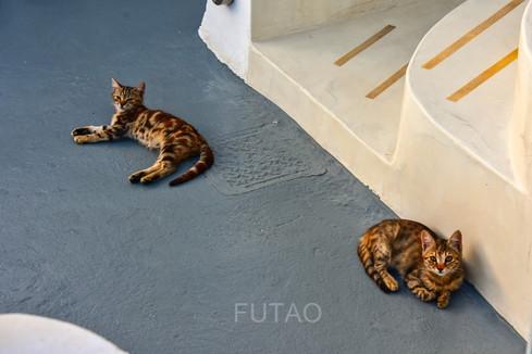 Kittens on our terrace, Helianthus Suites, Santorini, Greece