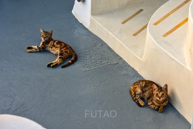 Kittens on our terrace, Helianthus Suites, Santorini, Greece
