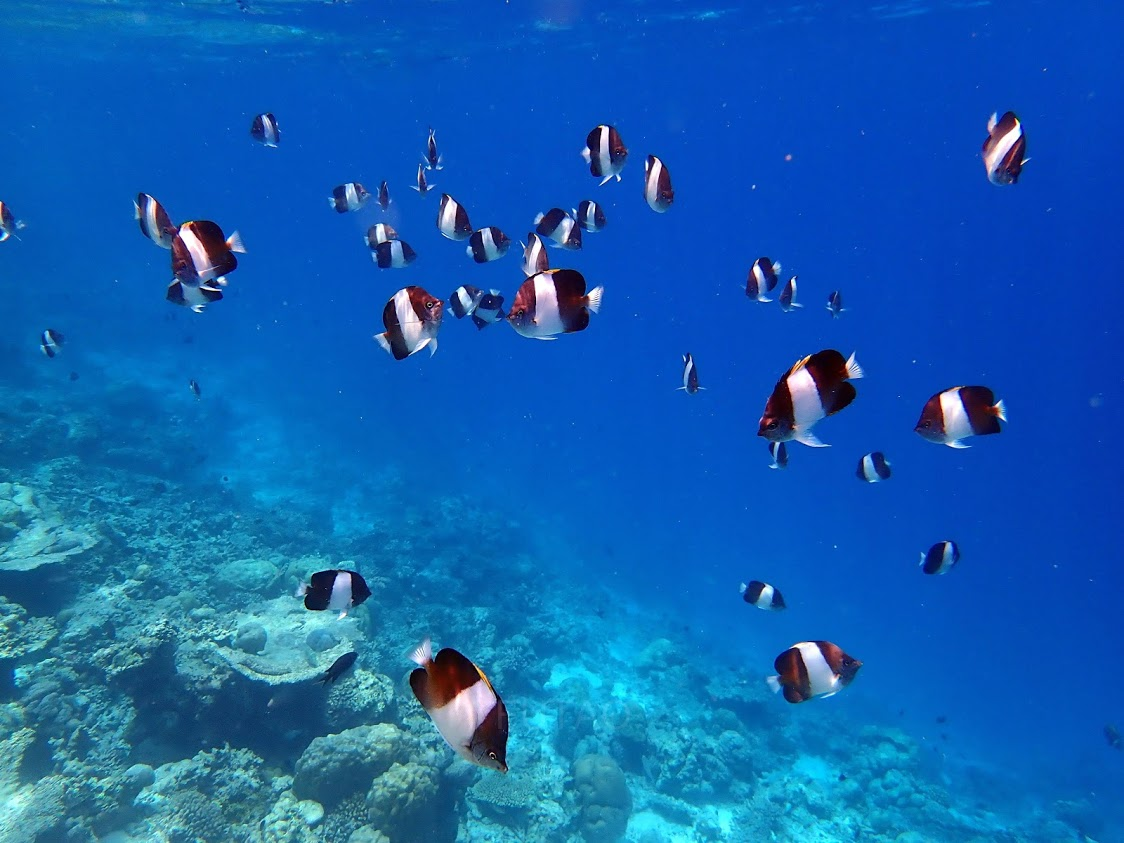 Underwater World *Coming Soon